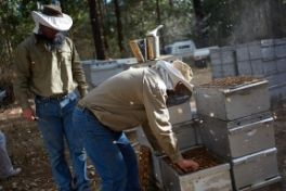 Beekeepers tending to their hives